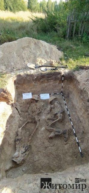 Житомирські пошуківці поїхали за легендою, а знайшли рештки 12 солдат Вермахту. ФОТО
