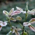 На вихідних у Житомирі та області очікуються заморозки