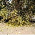 В парку Коростеня дерево впало на автомобілі. ФОТО