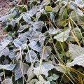 У мисці замерзла вода - ранковий мороз на Житомирщині. ФОТО