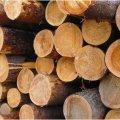 На Житомирщині слідчій поліції повідомили про підозру через незаконні дії з деревиною